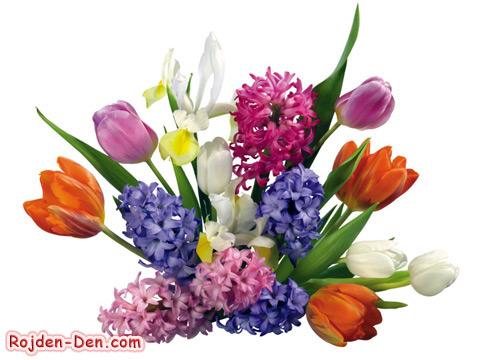 Честит Рожден Ден на Кари и Крис! (на мама silvenaiv) Cvetia15